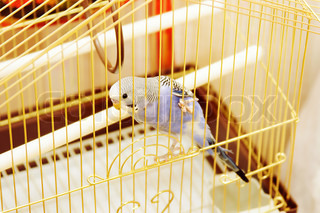 Parrot in the cage