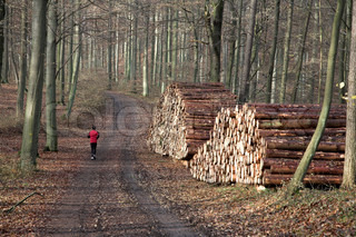 man running , jogging on a  forest path
