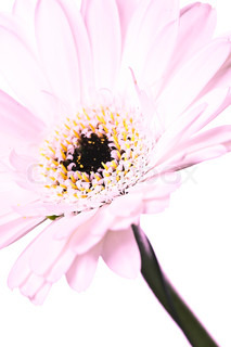 Billede af 'blomst, neutrale toner, den'