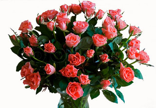 Billede af 'fødselsdag, blomst, botanik'