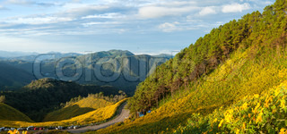 Field of yellow flowers on the mountain.