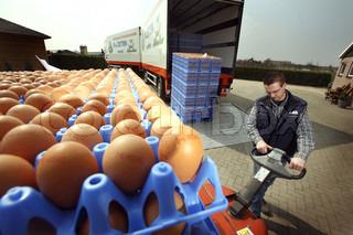 Man Entladen Eierkartons