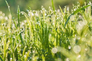 blur flowers in dew drops on a green meadow
