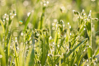 flowers in dew drops on a green meadow