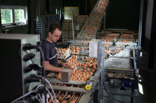 Man working in egg factory