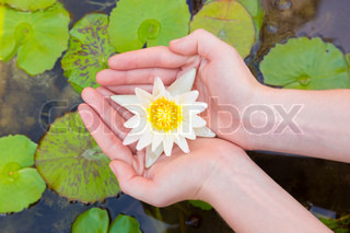 Woman hands holding lotus flower