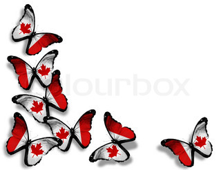 Canadian flag butterflies, isolated on white background