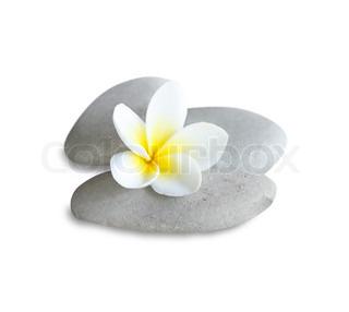 En eksotisk blomst lagt på sten