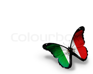 Mexican flag on butterfly | Stock Photo | Colourbox