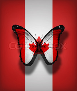 Canada flag butterfly, isolated on flag background