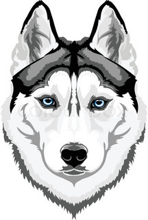 Vector drawing plaintive Huskies begging for lint | Vector | Colourbox