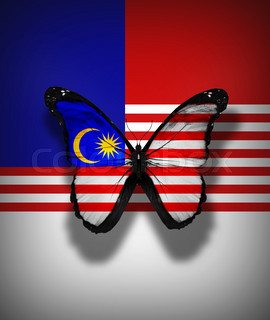 Malaysian flag butterfly, isolated on flag background