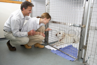 Image of 'pet insurance, visiting, collecting'