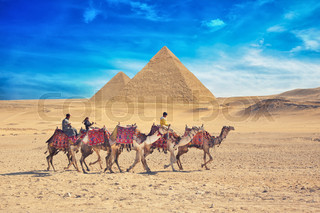bedouins on camel near of great pyramid in egypt