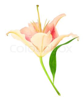 Billede af 'blomstre, Blomst, Valentine'