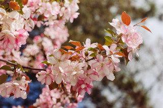Spring flowers on branches of trees