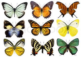Schmetterlinge, die isoliert auf weiss