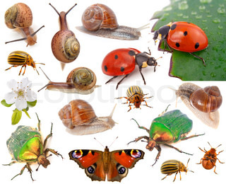 Insects isolated on white