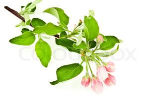 Billede af 'Blomst, Plant, Blossom'
