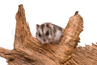 The small hamster sits on a tree.