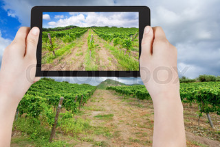 tourist taking photo of vineyard under clouds