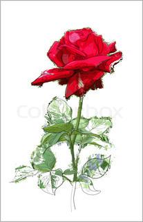 Vektor af 'rose, Vector, Silhouette'