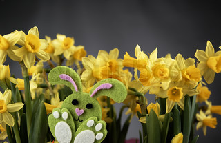 Easter bunny and yellow daffodils.