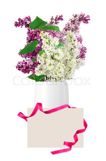 Beautiful Lilac branch in vase and blank card isolated on white