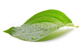 Image of 'leaf, isolated, spa'