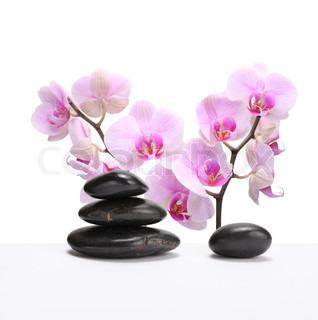 Billede af 'massage, donere, Blomst'