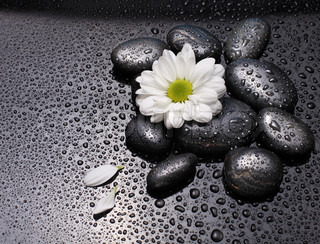 Image of 'flower, water, black'