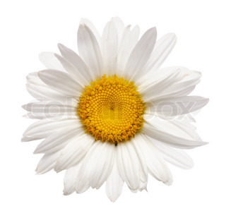Billede af 'baggrund, oxeye, hvid'
