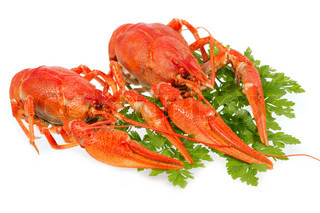 River crayfish on a white background. It is very tasty and dietary food.
