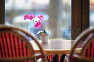 Beautiful lilac orchid in the white pot on the table