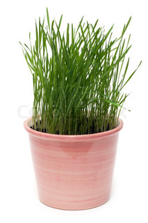 Billede af 'plante, plant, foråret'