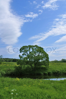 Alone tree river grass and blue sky stock photo colourbox - Impressive house with tranquil environment to get total relaxation ...