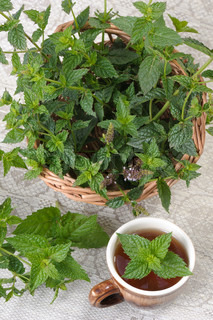 A bunch of mint in a basket and a cup of tea with a sprig of mint.