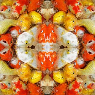 Koi fish, symmetry background