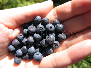 closeup of handful of fresh blueberries