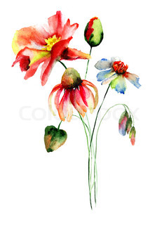 Colorful wild flowers