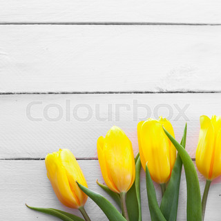 fresh yellow tulips