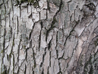 bark of old tree, nature background