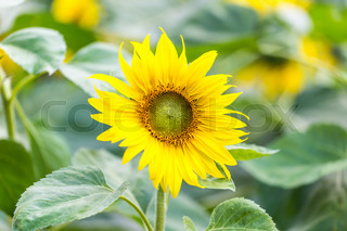 Bild von 'pflanze, anbauen, anlage'