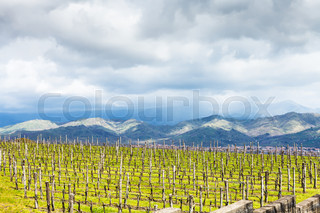 empty vineyard in Etna region in spring