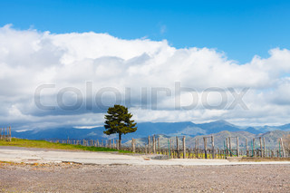 white clouds over vineyard in Etna region