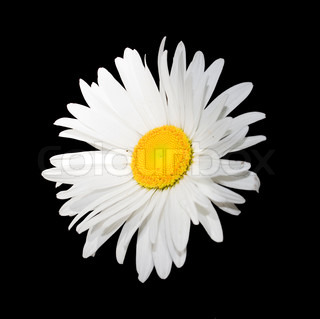 isolated  white flower on black