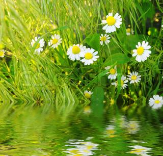 Billede af 'sommer, plante, Blossom'