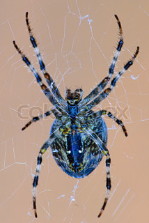 spider on a cobweb in summer