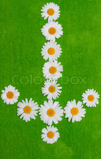 Daisywheels on green background in the manner of arrows