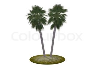 To palmer (det er ideelt isoleret på en hvid baggrund) høj opløsning